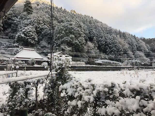 初雪が降る