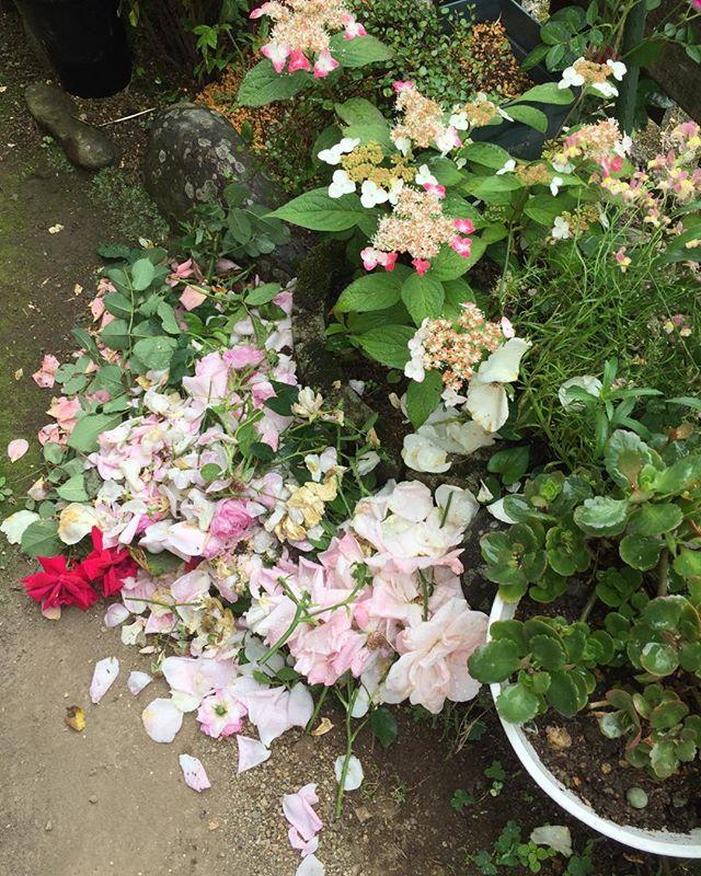 今年は珍しく花柄摘みに嬉しい悲鳴