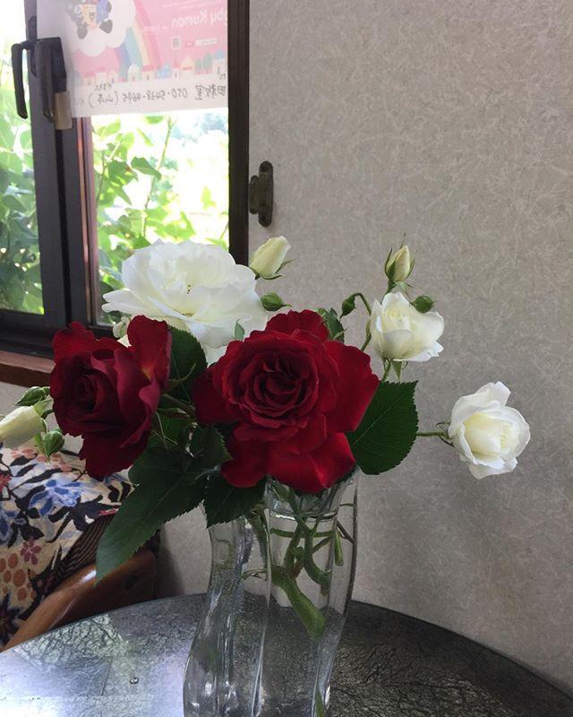 頂きものの薔薇早速、揷し木