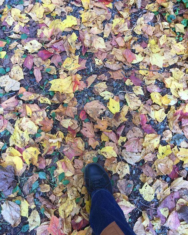 足元の落ち葉